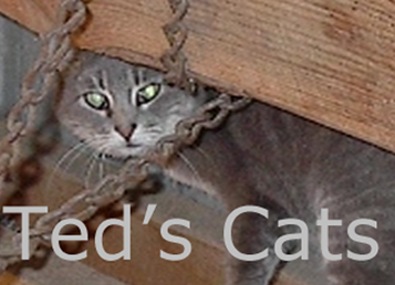 Ted's Cats